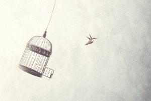 Vrijheid-ontsnapt